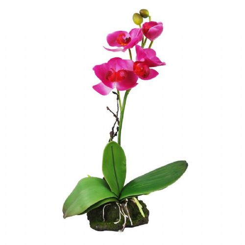 LR Upright Orchid Pink 30cm, IF-11